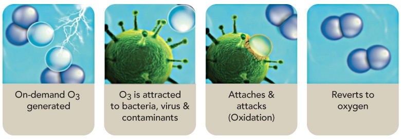 Jasa Pembersih Udara Dan Bakteri Penyebab Penyakit Dalam